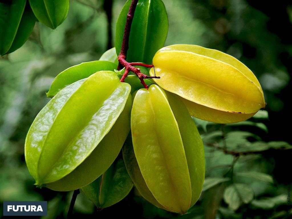 Carambole fruit étoilé