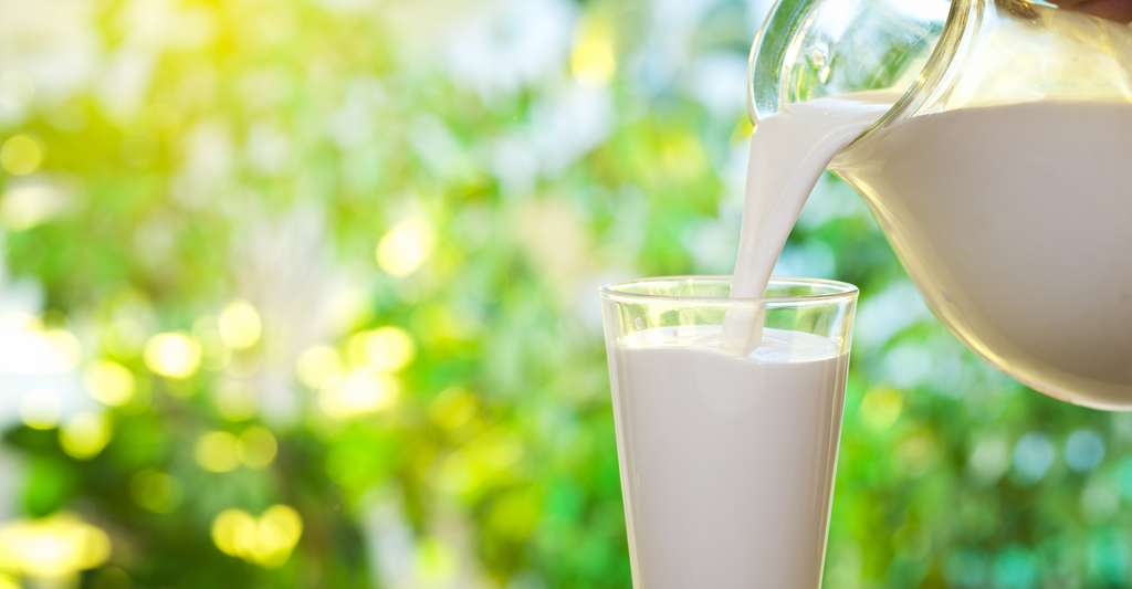 Les protéines du lait peuvent être source de réactions allergiques. © Valentyn Volkov, Shutterstock