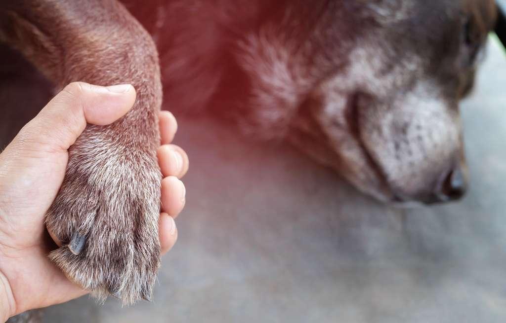 Si votre animal est accidenté, pensez d'abord à le rassurer. © methaphum, Adobe Stock