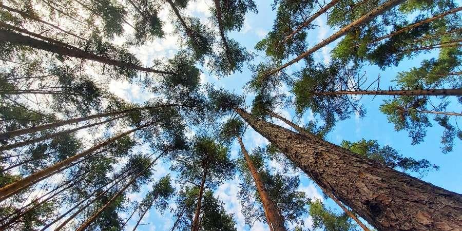 Non seulement le bruit nuit aux arbres et à la diversité des plantes, mais son impact négatif peut durer bien après le retour du silence. © Kletr, Shutterstock