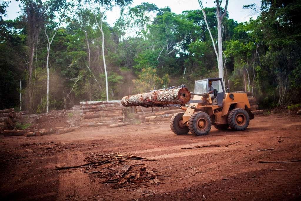 L'Amazonie est menacée par l'agriculture mais aussi l'extraction minière illégale de l'or et d'autres métaux, causes directes de la déforestation. © Marcio Isensee e Sá, Adobe Stock