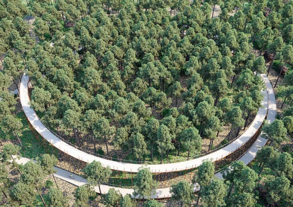 La piste cyclable de Limbourg s'élève au-dessus d'une forêt de pins (Belgique). © BuroLandschap, BYCS