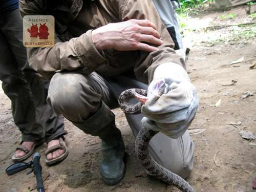 À l'image, l'un des plus mortels serpents ! © Johann Haug/SBP