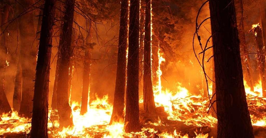 En 2017, la hausse des températures consécutive à l'accumulation de gaz à effet de serre dans l'atmosphère a participé à la multiplication des feux de forêt partout dans le monde. Aux États-Unis, ce sont 4 millions d'hectares de forêts qui sont partis en fumée. © Skeeze, Pixabay, CC0