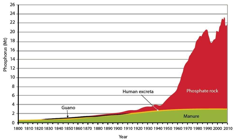 Les sources de phosphore sont longtemps restées du domaine du renouvelable : guano, excréments humains et fumier (Manure). Depuis de nombreuses décennies, cet élément indispensable à l'agriculture provient essentiellement de l'extraction minière (Phosphate rock). © Cordel et al., 2009