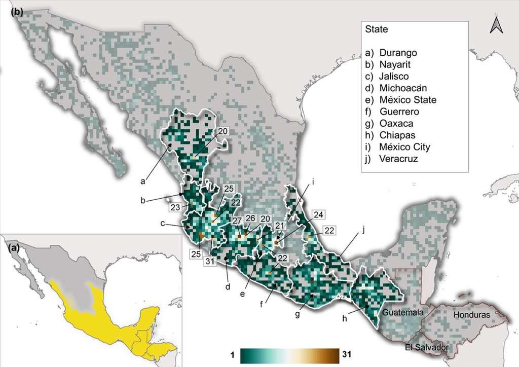L'étude a été menée en Mésoamérique (en jaune) et la distribution spatiale des taxons étudiés est indiquée en nuances de vert et orange. © Goettsch et al., 2021