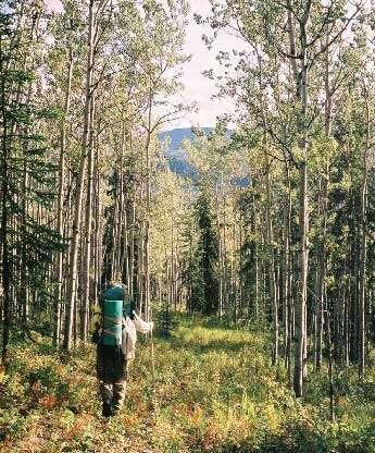 La marche en forêt : salutaire et apaisante.