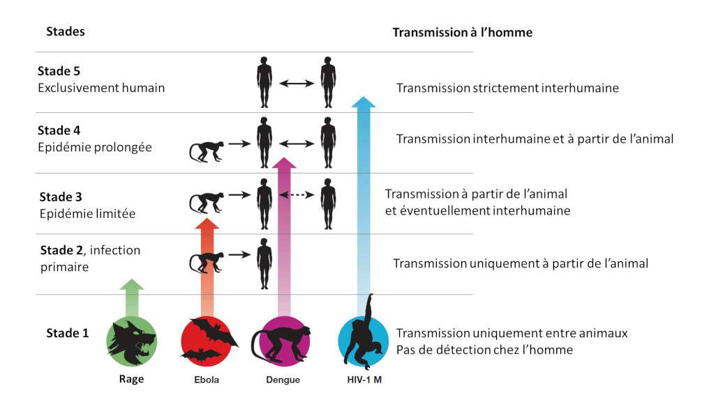 Origine des principales maladies infectieuses. Adapté de © Wolfe et al., Nature, 2007