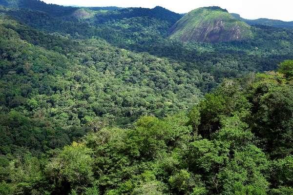 Massif de Mitaraka, Guyane. © Olivier Pascal, MNHN, PNI
