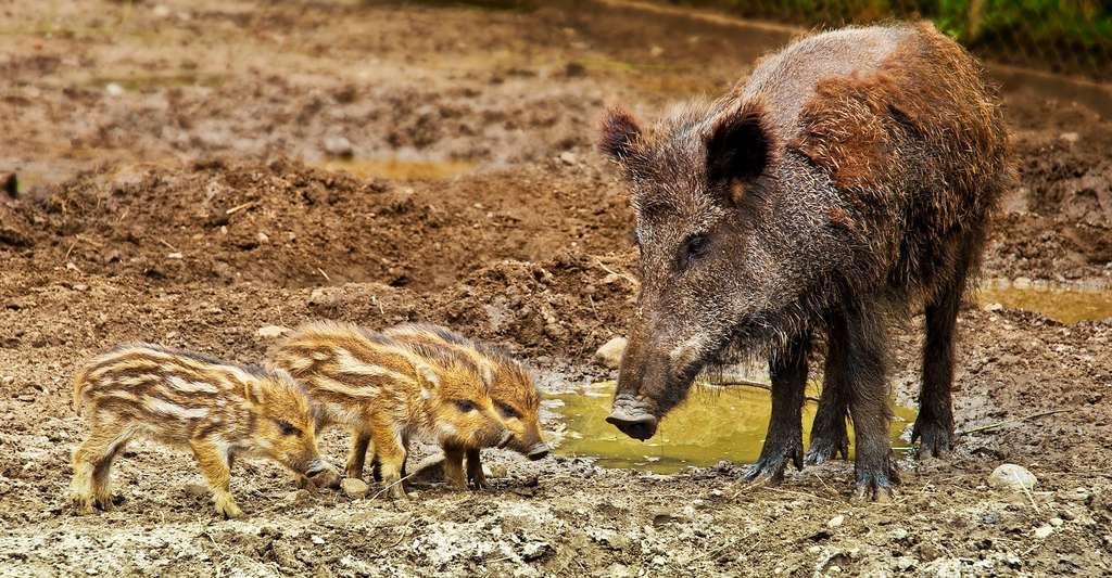 Les animaux sauvages d'une même espèce peuvent agir différemment en fonction de leur phénotype. © iisjah, Pixabay