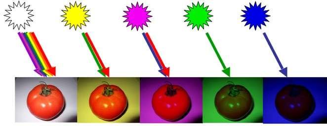 Apparence d'une tomate sous divers éclairages : lumière blanche, jaune (rouge + vert), magenta (rouge + bleu), verte, bleue. © B. Valeur, DR