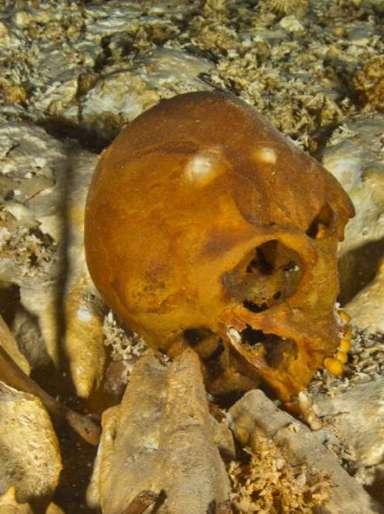 Le squelette de Naia, prénommée d'après les naïades, nymphes aquatiques de la mythologie grecque, comprend notamment le crâne, les deux bras et une jambe. © Roberto Chavez Arce