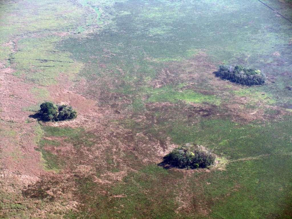 Un îlot forestier dans la région de Llanos de Moxos, au nord de la Bolivie. © Umberto Lombardo