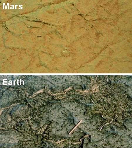 Formes craquelées à la surface d'une roche sédimentaire martienne (photographié par Curiosity) qui, selon Nora Noffke, présente des similitudes avec les colonies microbiennes terrestres comme celles de Bahar Allouane, en Tunisie. © Nasa, N. Noffke