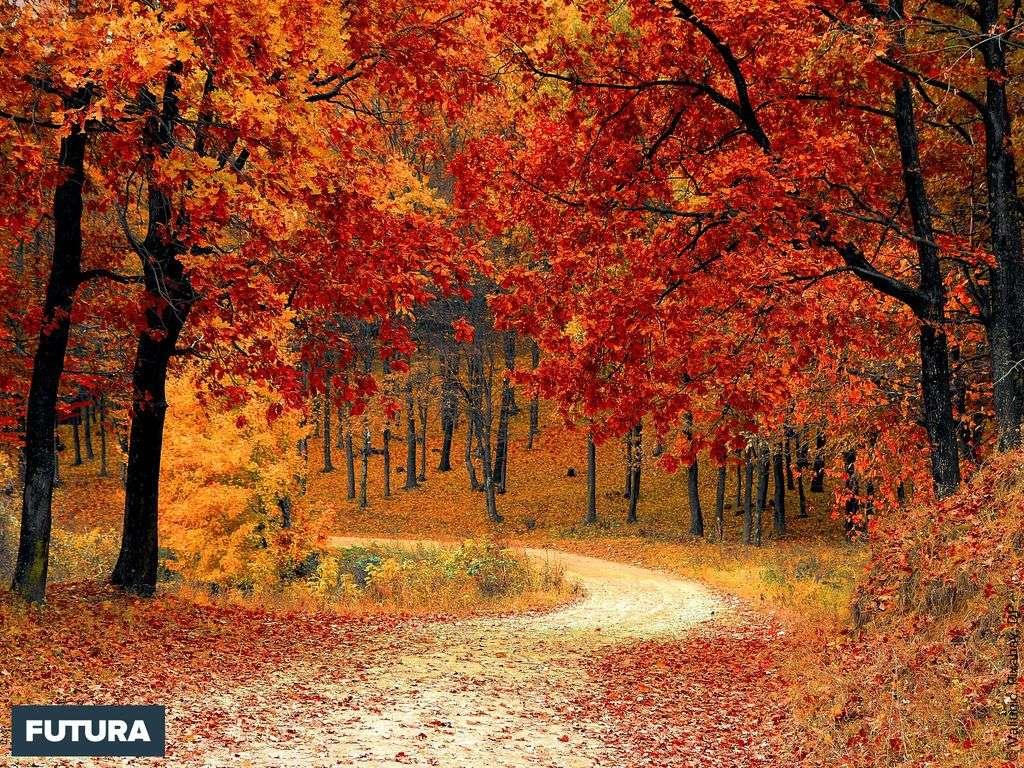 L'automne est une demeure d'or et de pluie