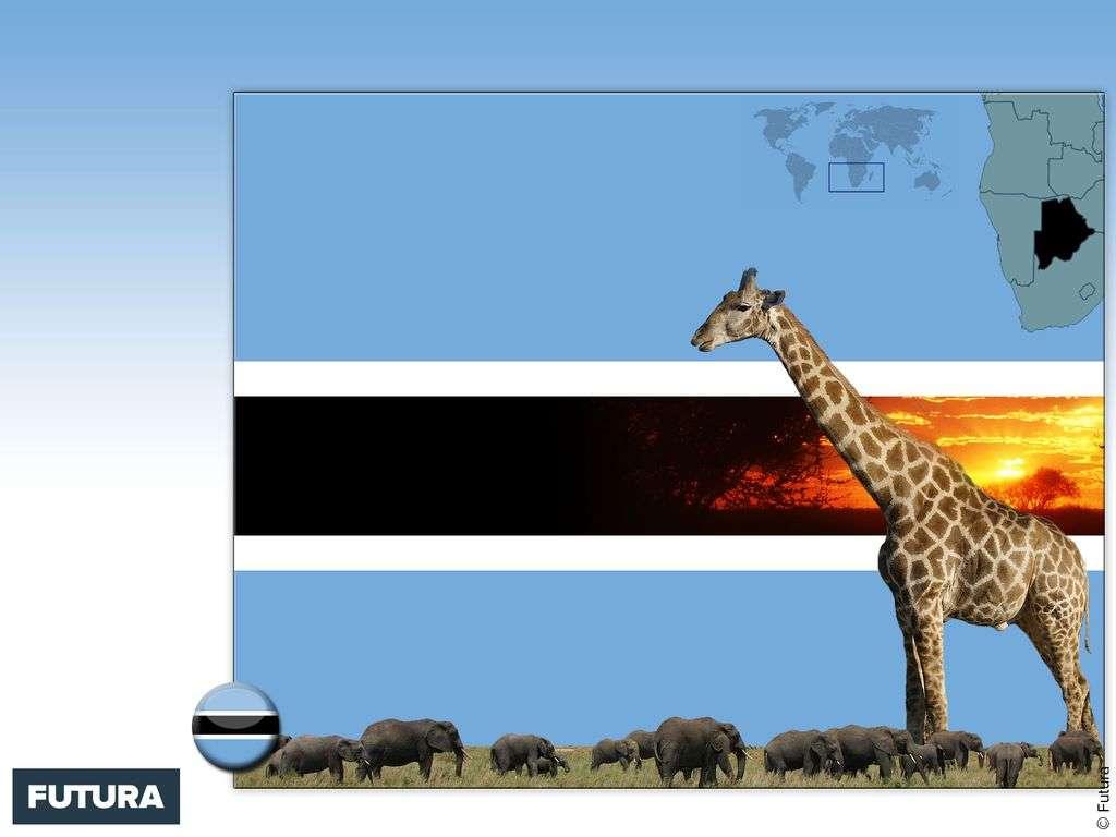 Drapeau : Botswana