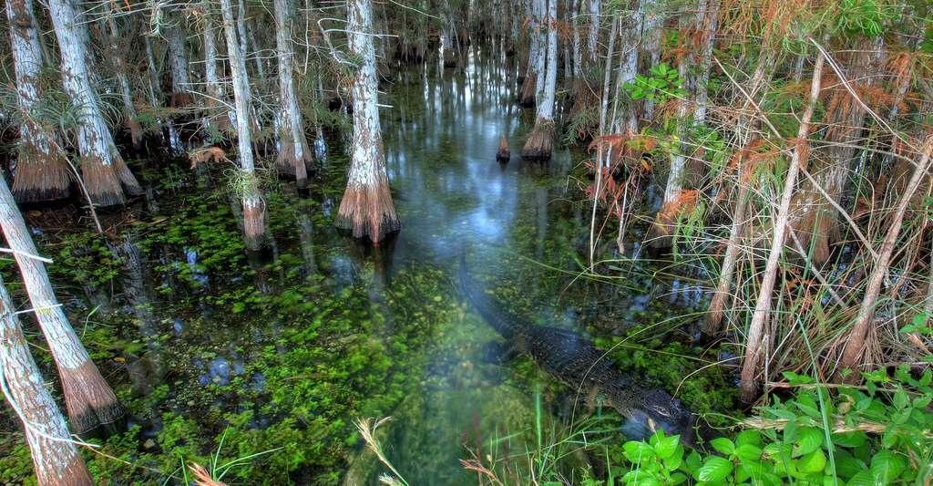 Les Everglades. © Everglades NPS, Domaine public