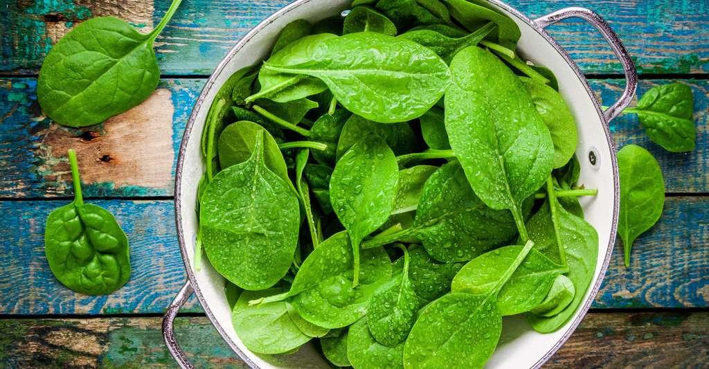 Les jeunes pousses d'épinard sont délicieuses en salade. © Ekaterina Kondratova, Shutterstock