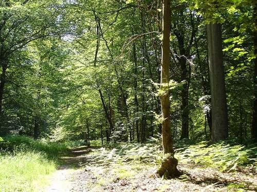 Forêt de Laigue. © Touriste domaine public