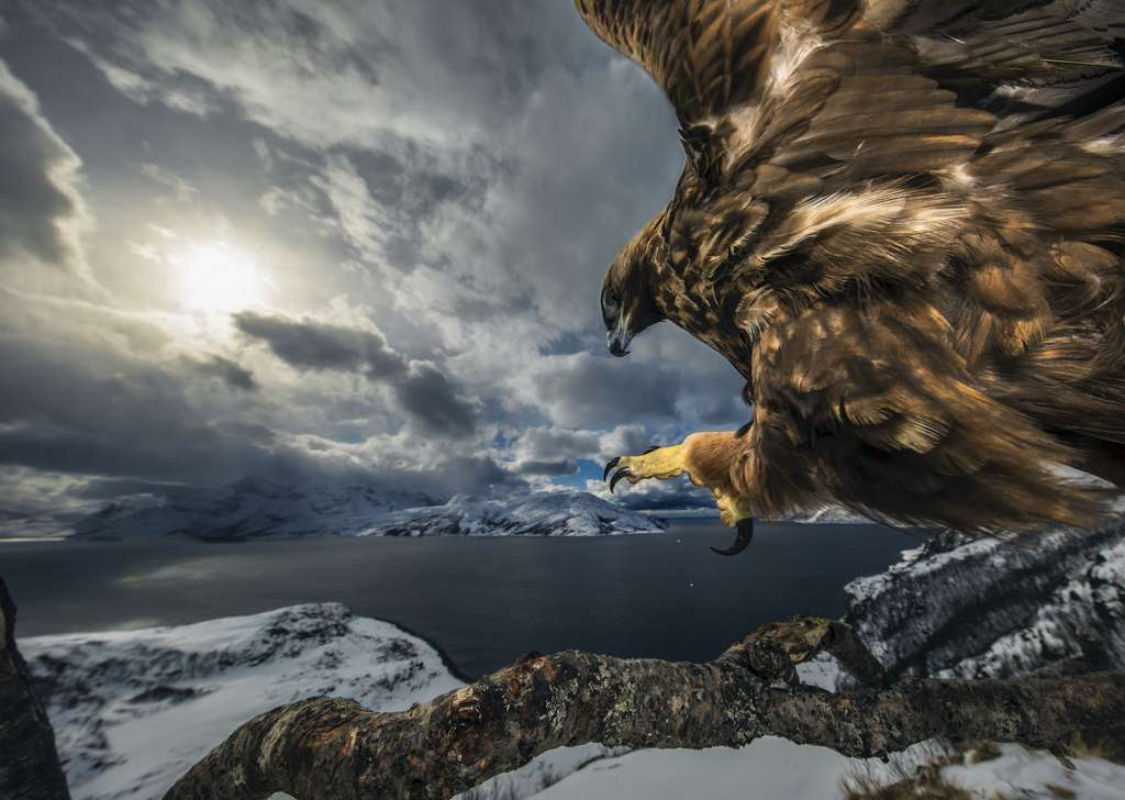 Land of the eagle. © Audun Rikardsen
