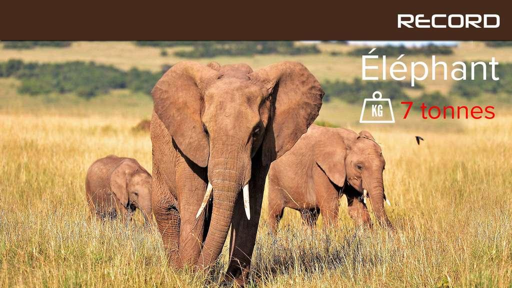 L'éléphant, un géant plutôt intelligent