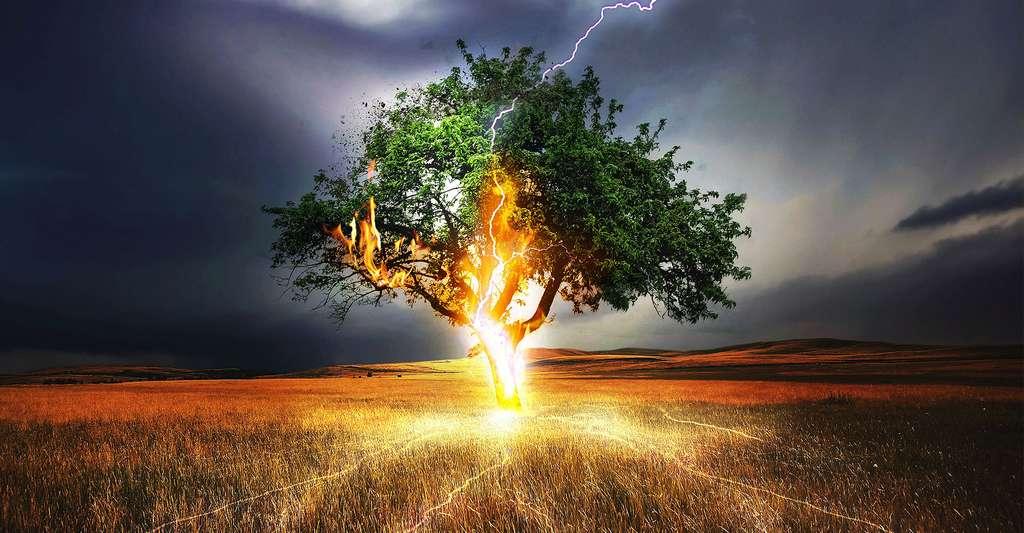 La foudre tombe sur un arbre en plein champs. © Comfreak - Domaine public