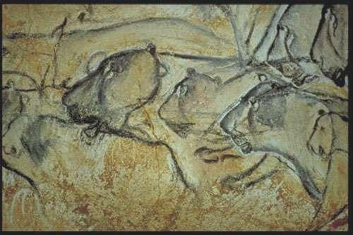 Lions des cavernes de la grotte Chauvet