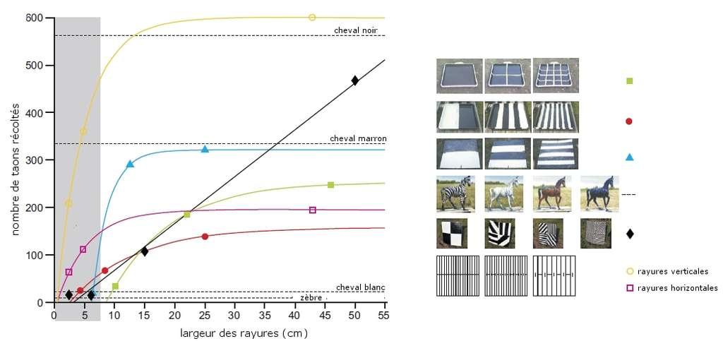 Résultats des expériences réalisées par les chercheurs. À droite, les différents modèles de rayures pour lesquels l'attirance des taons a été testée. Pour chacun des six modèles, plusieurs largeurs de rayures ont été testées (sauf pour le quatrième où il s'agit juste de couleurs différentes). Le nombre de taons attirés lors de chaque expérience est reporté sur le graphique. La bande grise représente la largeur d'une rayure de zèbre (maximum 8 cm environ). © Egri et al. 2012, Journal of Experimental Biology, adaptation Futura-Sciences