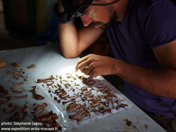 Olivier Testa, responsable de l'exploration spéléologique, classe les os retrouvés dans un puits. © Stéphanie Jagou