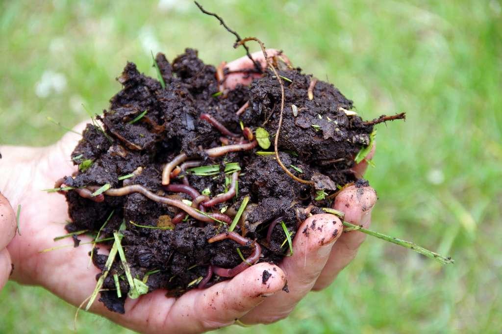 Une terre en bonne santé riche en vers de terre. © savoieleysse, fotolia