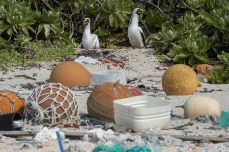 Des déchets sur une plage de l'île Henderson, dans le Pacifique, le 10 juin 2019. © Iain McGregor, Stuff, AFP, Archives
