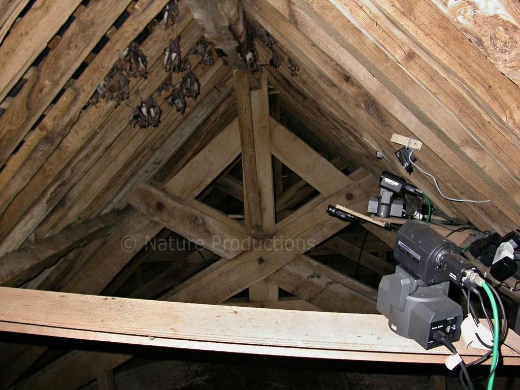 Aménagée dans les combles, une caméra télécommandée permet d'observer sans perturber. © Pascal Provost, DR