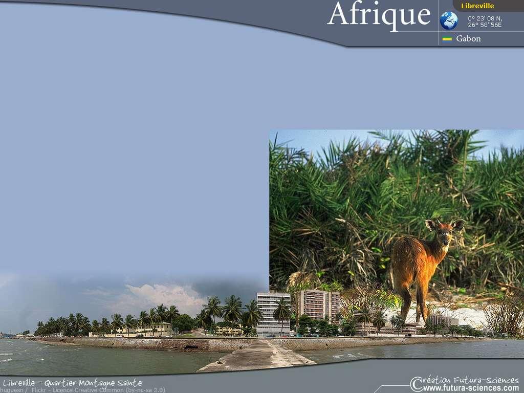 Afrique : Libreville