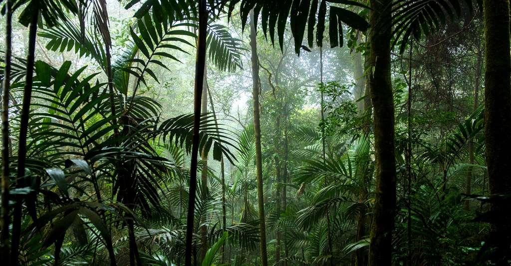 Plongez dans la forêt et découvrez les mystérieuses mains des grottes de Bornéo. © Tisha 85, Shutterstock