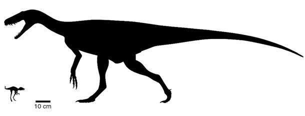 Silhouette de Kongonaphon kely (gauche) aux côtés de l'un des premiers dinosaures, Herrerasaurus (droite) © Scott Hartman, Frank Ippolito, AMNH