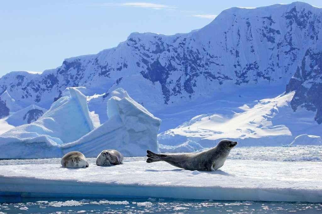 La banquise de l'Antarctique fond. © reisegraf, Fotolia