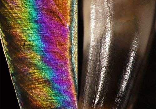 Lignes d'évolution de la molaire étudiée, à l'intérieur (lignes diagonales) et à l'extérieur (lignes incurvées horizontales). Elles indiquent un âge approximatif âgé de 8 ans à sa mort. © Max Planck Institue