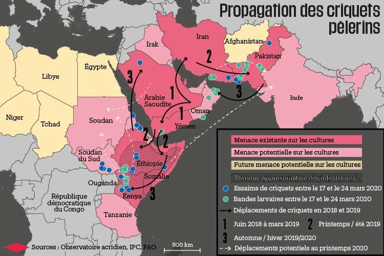 Propagation des criquets pèlerins en 2020. © FAO