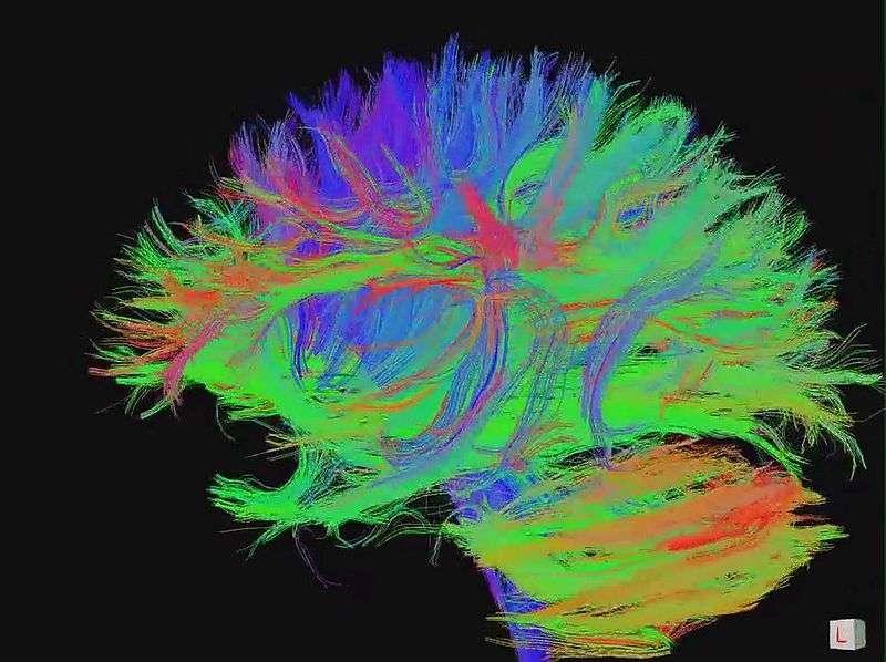 Connexions entre neurones du cerveau. La synchronisation des ondes cérébrales pourrait précéder la formation de nouvelles synapses. © jgmarcelino (Newcastle upon Tyne, Royaume-Uni), cc by 2.0