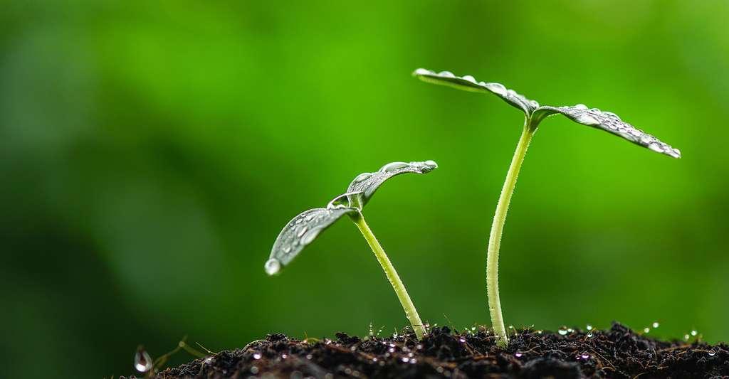 Pousses de jeunes plantes. © Antpkr, Fotolia