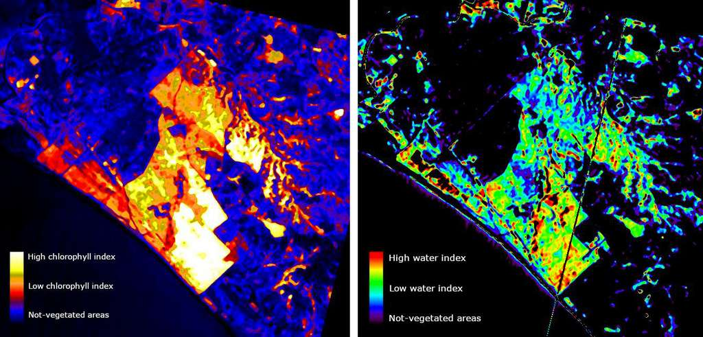 À Castel Fusano (Italie), zone naturelle protégée et menacée par de fréquents incendies, Prisma a effectué deux analyses. La première concerne l'état de la végétation, avec une mesure de densité de chlorophylle (image de gauche). Quant à la seconde, elle a permis de mesurer la présence d'eau dans des zones forestières et d'identifier les zones sèches présentant un risque plus élevé d'incendie. © ASI, Leonardo