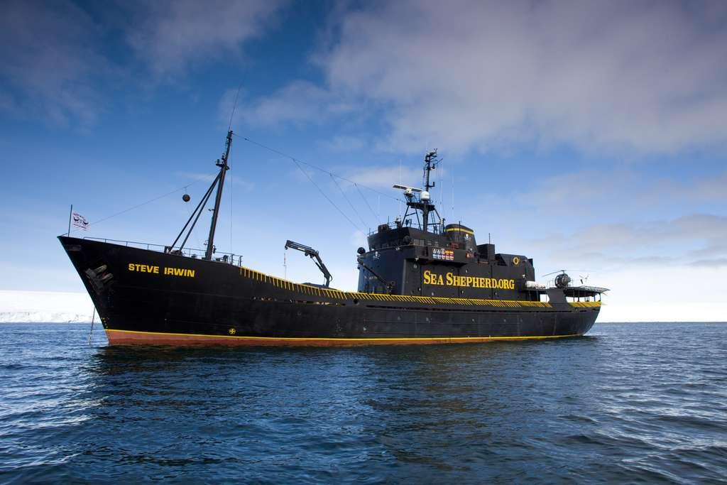 Le Steve Irwin, navire de l'association Sea Shepherd. © Michael Willimas/Sea Shepherd