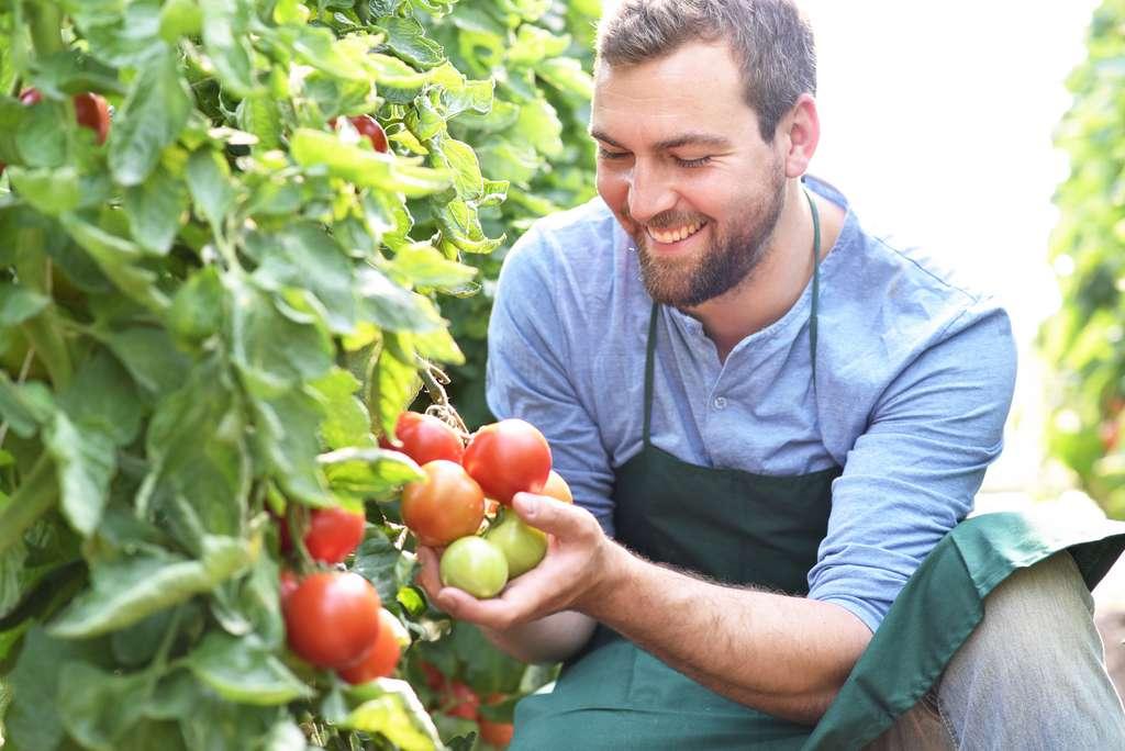 La maturité à la récolte est l'un des facteurs majeurs de la richesse nutritionnelle d'un aliment. © industrieblick, Adobe Stock