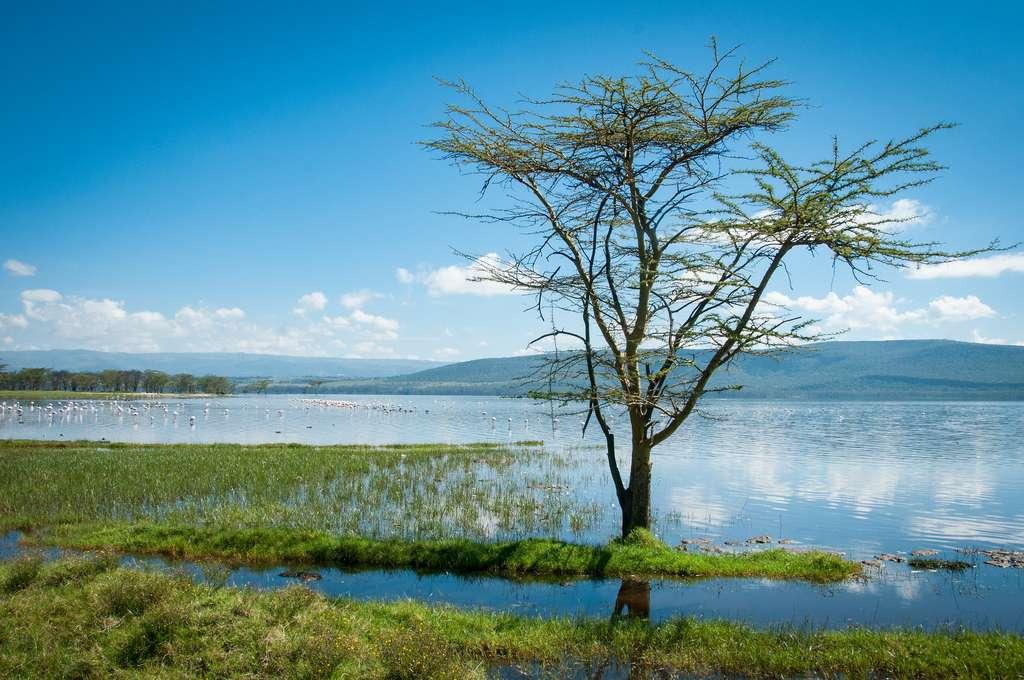 Le lac Victoria alimente un riche écosystème et alimente en poissons et en électricité des millions de personnes. © Ben & Gab, Flickr