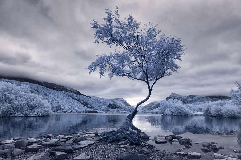 Vainqueur catégorie paysages : L'arbre solitaire. © David Hall