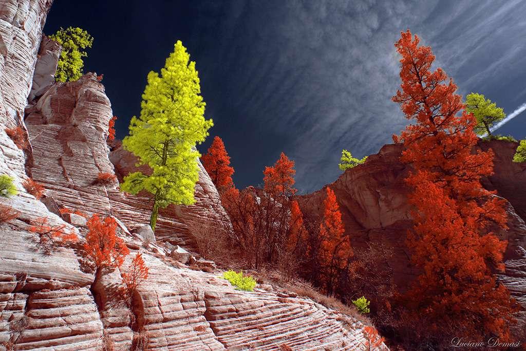 Vainqueur catégorie essai : Utah. © Luciano Demasi
