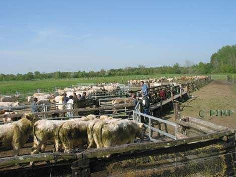 Parc à contention pour l'accueil des animaux. © Parc Interrégional du Marais Poitevin - Tous droits de reproduction interdit