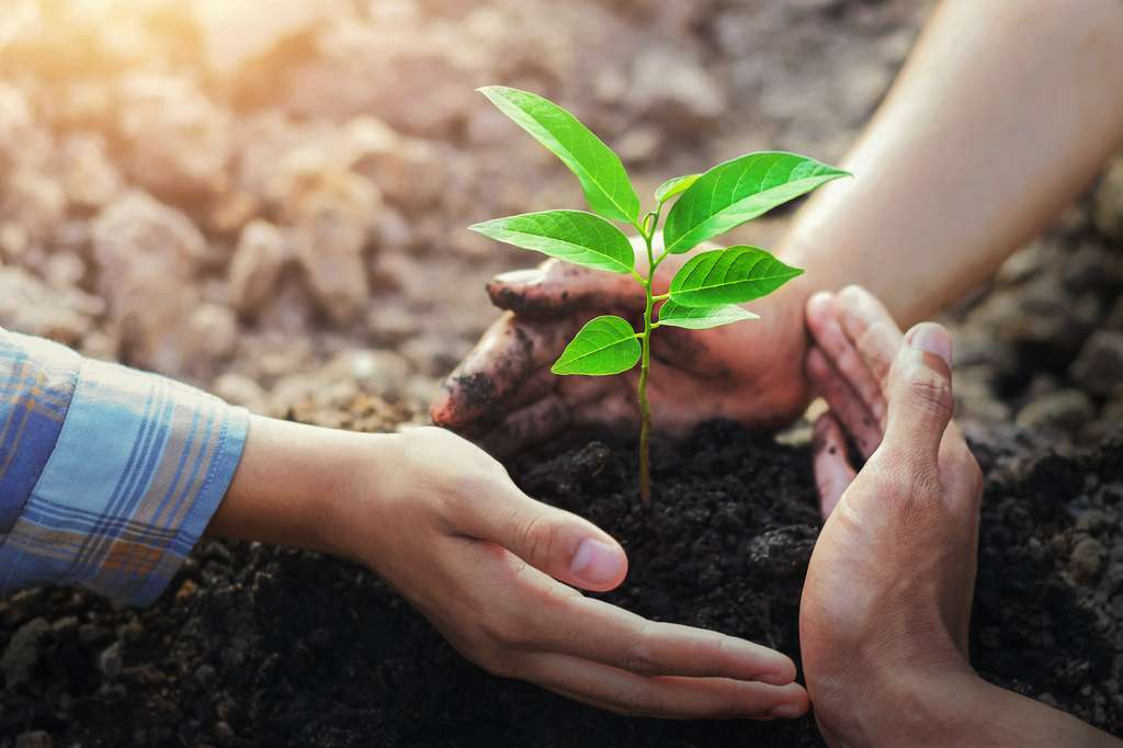 Planter des arbres peut aussi être considéré comme une opération de réensauvagement. © lovelyday12, Adobe Stock