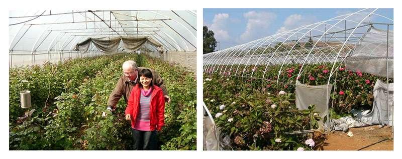 Serres horticoles à côté de l'aéroport de Kunming (Chine) ; l'ingénieure gagne 100 $ par mois ! © Bruno Parmentier