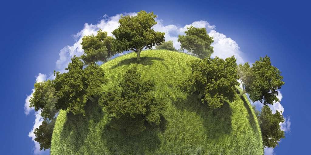 Il faudrait planter 1.200 milliards d'arbres supplémentaires sur la planète pour absorber l'équivalent de dix ans d'émissions de CO2 anthropiques. © vitaga, Fotolia